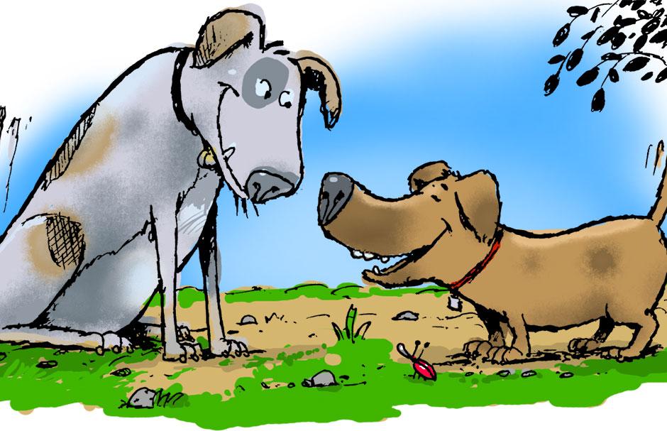 Dog Park Meeting