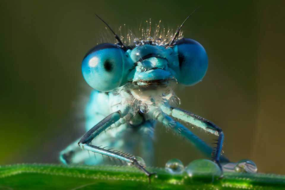 Do insects sneeze, cough, or hiccup?
