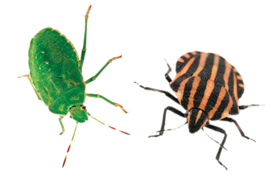 What's the difference between a bug and an insect?