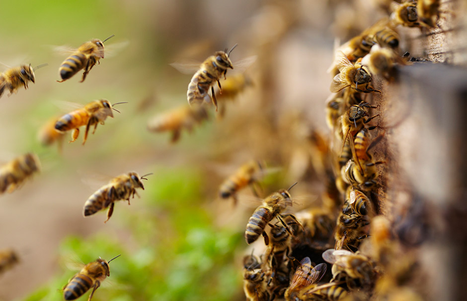 What makes a bee buzz?