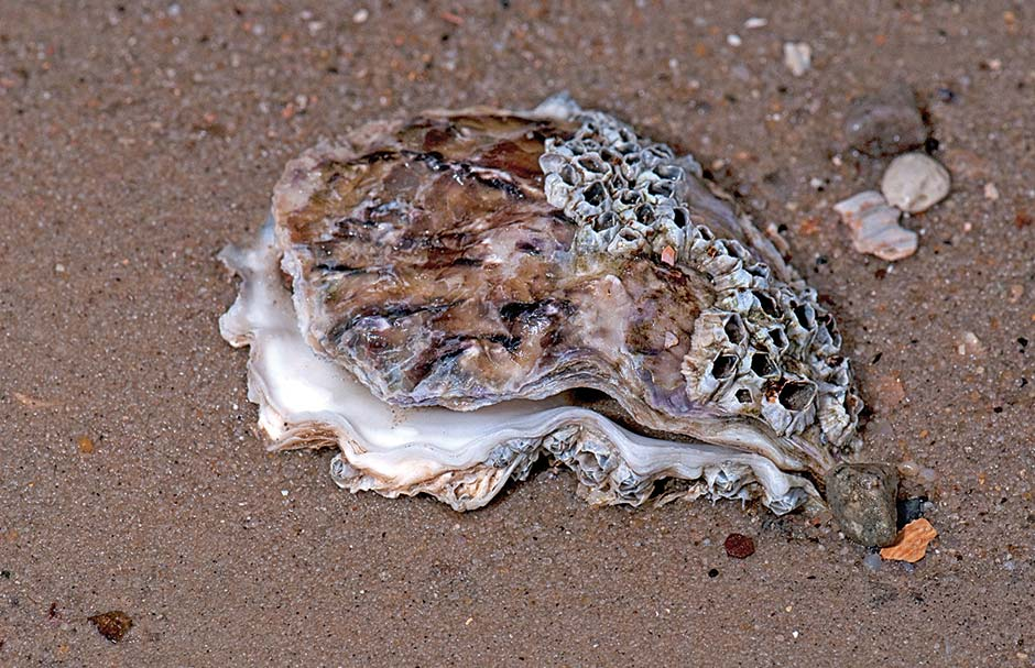 How do seashells form?